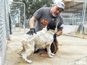 Most Haven rescues still at home