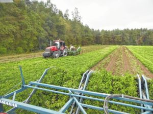 Rains bring strong crop yields
