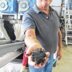 Farm finds power in hogs